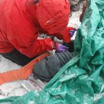 Wilderness First Responder student practices splinting a leg in the snow